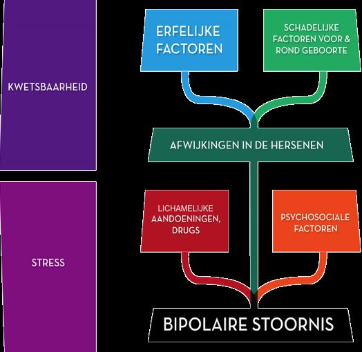 Erfelijkheid: een bipolaire stoornis wordt veroorzaakt door een combinatie van een mogelijk aanwezige erfelijke kwetsbaarheid en het optreden van omgevingsfactoren.